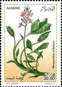 Menyanthes trifoliatra