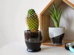 DIY - Le verre qui devient pot de fleur • Hellocoton.fr