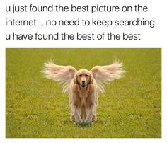 21 Funny Memes To Start Your Saturday Right Does This look like a certain Pokémon we all know? Source by dog dog memes dog videos videos wallpaper dog memes dog quotes dogs dogs pictures dogs videos puppies puppy video Funny Animal Jokes, Funny Dog Memes, Cute Funny Animals, Funny Cute, Funny Dogs, Hilarious Sayings, Dog Humor, Funny Horses, Hilarious Jokes