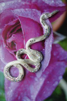 In jeder Farbe erhältlich!!! Snake, Colour, A Snake, Snakes