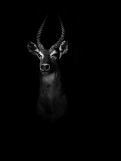 Dramatic Black and White Portraits of Exotic Animals - My Modern Metropolis