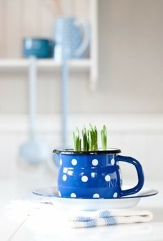Succulents in coffee mugs Love Blue, Blue And White, Minty House, Deco Blue, Vintage Enamelware, Color Azul, My Favorite Color, Shades Of Blue, All The Colors