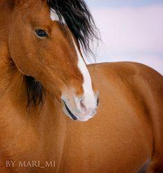 Horse / Krasavchik by mari-mi