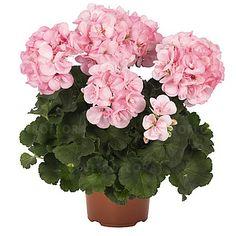 Survivor Scandic Vitroflora Floral Wreath Floral Survivor