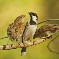 Free Download- Bird Animal Wildlife Nature Images - Bird And Wildlife Photography  Free Download offers by bird and wildlife photography.Download bird,animals,wildlife,nature,candid,portrait,street,macro images and clicks free.subscribe it  Read this on birdandwildlifephotography.com >