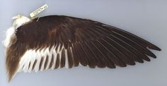 Bird Wings | More information: