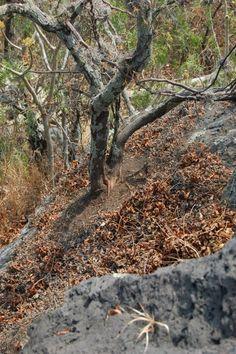 árbol sobre roca volcánica