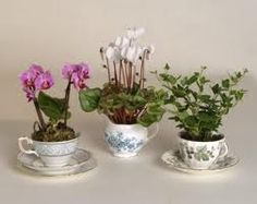 use tea cups as planters for the fairies - this is a great idea for the surplus teacups I'll have after the wedding.
