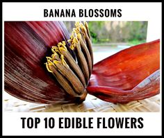 Best Edible Flowers for Your Cuisine: Flowers That You Can Eat Banana Blossom, Banana Flower, Growing Plants, Growing Vegetables, My Flower, Flower Power, Glowing Flowers, Best Edibles, Popular Flowers