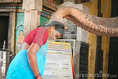 Temple elephant blessing with his trunk touch a Hindu woman, Kumbhakonam, tamilnadu, India