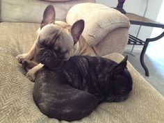 My cuddly frenchies