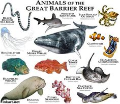 Animals of the Great Barrier Reef....ROGER D HALL.....a scientific illustrator specializing in wildlife and architectural subjects....predominantly self-taught....works with pen and ink....artwork has appeared in numerous media (newspaper, books, website, etc)....a Minnesota native now based in Oakland, California....associated with several zoos and aquariums in the US
