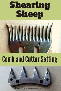 Wondering how to set the comb and cutter to shear your sheep? We (my husband, actually) shear all of our own sheep, over so he has plenty of experience with setting the blades! Pet Sheep, Sheep Farm, Sheep Shearing, Baa Baa Black Sheep, Farm Store, Mini Farm, Backyard Farming, Ffa, Alpacas