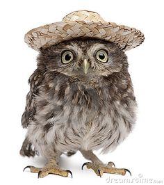 Owl in a sombrero