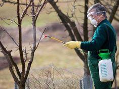 Ha enyhe a tél a kártevők (atkák, rovarok) és a kórokozók (gombák, baktériumok) is átteleltek, nem gyéríti őket a fagy. Ilyenkor nagyon fontos la tavaszi lemosó permetezés!