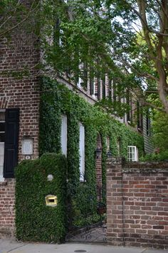 Charleston...  How do I get this ivy to grow on my brick cape cod?