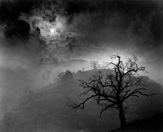 Wynn BULLOCK :: Stark Tree, 1956