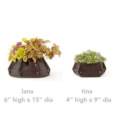 Recycled Felt Planters by Wooly Pockets for the mom with a green thumb. For #MothersDay