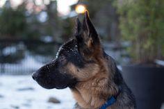 Snow Doggo http://ift.tt/2qYoZcB