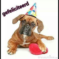 Boxer Bulldog, Boxer Dogs, Boxers, Happy Birthday Dog, Dog Cat, German, Cap, Puppies, Pets