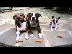 Three dogs, told to wait for their treats. - YouTube