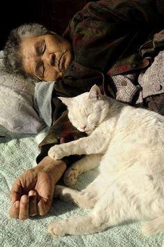 """[Misao la abuela y Fukumaru el gato], Copyright © 伊原美代子/ Miyoko Ihara - [*- Hace 12 años, Miyoko Ihara ha comenzado a tomar fotos de su abuela, Misao. Miyoko quería dejar una prueba viva de ella. Un día, su abuela encontró un gatito de ojos extraños. Lo nombró """"Fukumaru"""". Aunque ella tiene 87 años, que todavía sale al campo todos los días, y Fukumaru la acompaña. La vida de una anciana y de su gato capturadas en fotos. La abuela y Fukumaru están siempre mirándose a los ojos y dándose…"""