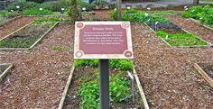 The Outlander Plant Guide: The Medicinal Gardens at Bastyr University Starz Series, Outlander Series, Plant Guide, Plant Information, Diana Gabaldon, Botany, Garden Inspiration, Scotland, Medicine