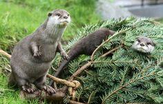 Archibald Otter (@Otter_News) | Twitter