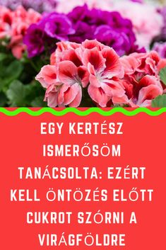 Cukor, Vegetables, Garden, Plants, Tips, Garten, Lawn And Garden, Vegetable Recipes, Gardens