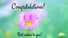 Free Congratulations images HD for Promotion Success Achievement - social lover Congratulations Flowers, Blessing Words, Hd Picture, Flower Images, Custom Wallpaper, Success, Lovers, Messages, Cards