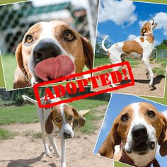 chuck_01Adopted