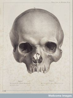 Skull, from Treatise on human and comparative phrenology.