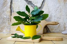 Korn, Watering Can, Herbs, Canning, Creative, Gardening, Lawn And Garden, Herb, Home Canning