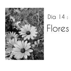 Día 14 : Flores