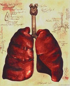 The lungs are an area of great strength or sensitivity for Gemini.  Depending on the Gemini, he or she may have respiratory issues or alternately, may be an exquisite runner or any other kind of athlete that draws on an ability to breathe well.