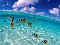 Risultati immagini per beautiful underwater fish photography