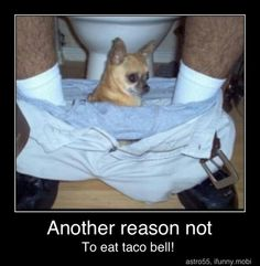 ...or TO eat Taco Bell...