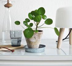 Jóhírek - Mágikus szobanövények, amelyek bőséget hoznak életedbe