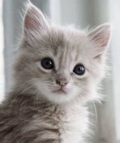 Time for an extremely cute kitten!