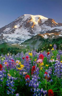 Rila Mountain flowers, Bulgaria Do you need a #lawyer in #Bulgaria? http://www.lawyers-bulgaria.com/blog/2015/06/new-investment-opportunities-in-bulgarian-region-burgas