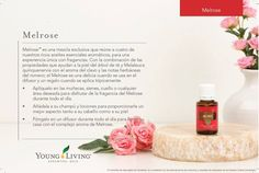 Melaleuca, Young Living Oils, Positive Quotes For Life, Essential Oils, Magic, Google, Happy, Young Living Essential Oils, Humectant