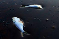 Federal Judge Approves $20 Billion Settlement in BP Oil Spill - The Atlantic