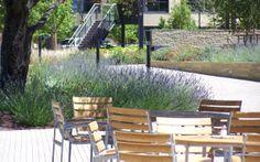 SITEWORKS STUDIO :: Charlottesville landscape architecture and garden design LAVENDER