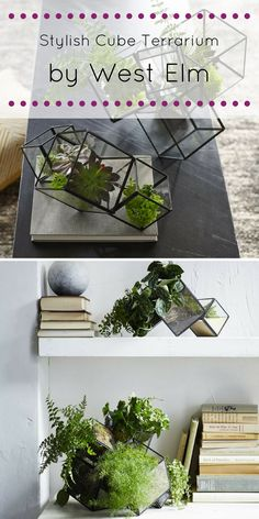 House your succulents, ferns and small flowers in this stylish Cube Terrarium. (Affiliate) || http://shopstyle.it/l/Awi || Home decor, Home decor Ideas, Home decor on a budget, Home decor Ideas on a budget, Home decor Ideas living room, Home ideas, Home design, Home design inspiration, interior design, interior design ideas, interior design living room, living room decor, living room decor ideas