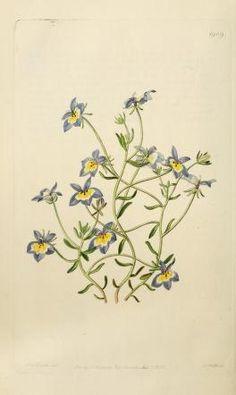 v. 22 (1836) - Edwards's botanical register. - Biodiversity Heritage Library