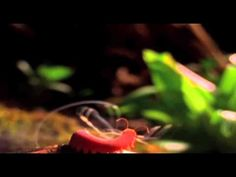 ▶ The Coolest Nature Video Ever [Edited By Roen Horn] - YouTube