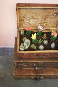 West nativo | cactus garden in an old vintage suitcase