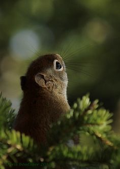 Squirrel by CanonSX20 - Chris Boutilier