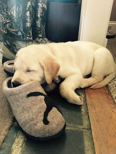 Just how comfortable are our Daybreak Slippers? You'll have to wake him up to ask. (Photo via Facebook: Kristina E.) #NationalPuppyDay