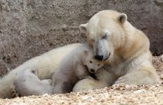 New at these zoos: Best baby pictures from a new crop of young'uns from zoos in Germany, Hungary, Austria, and more.